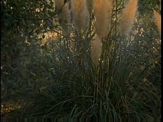 The Exotic Time Machine 1998 Dvdrip [ita] - Xnxx.com